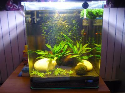 Aquarium nano cube 30l betta par adri 39 for Poisson aquarium 30l