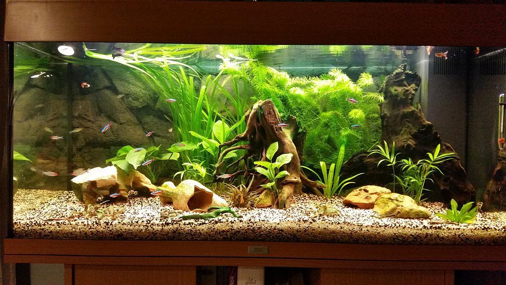 Decor Aquarium Hauteur