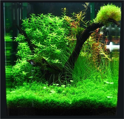 Aquarium eau douce 30l for Nano aquarium eau douce