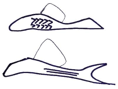 croquis pleco - ancistrus