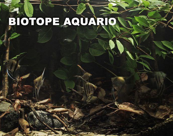 photo https://www.aquariophilie.org/images/all4aquarium_05.jpg