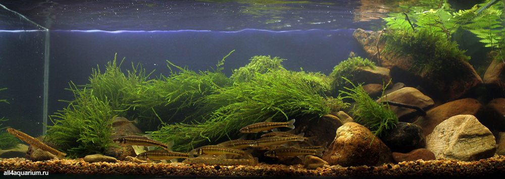 photo https://www.aquariophilie.org/images/all4aquarium_biotope-aquarium_02.jpg