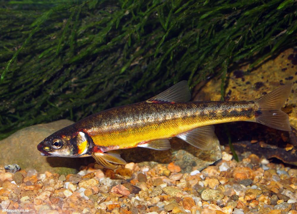 photo https://www.aquariophilie.org/images/all4aquarium_biotope-aquarium_03.jpg
