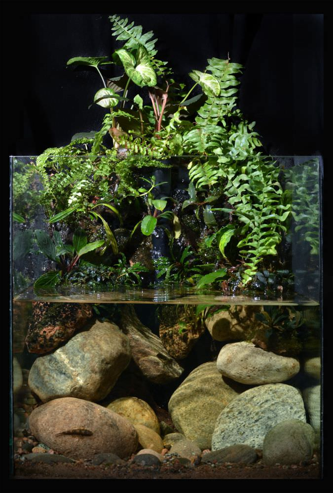 photo https://www.aquariophilie.org/images/all4aquarium_biotope-aquarium_06.jpg