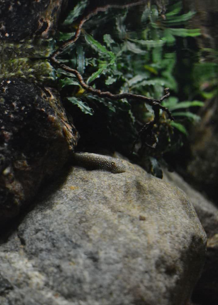 photo https://www.aquariophilie.org/images/all4aquarium_biotope-aquarium_07.jpg