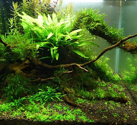 photo ../images/aquarium-aquascaping-nano-yoyo74.jpg