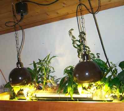 photo lampe HQL