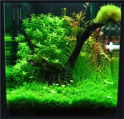 photo https://www.aquariophilie.org/images/aquarium-nano-30l-nicolas.jpg