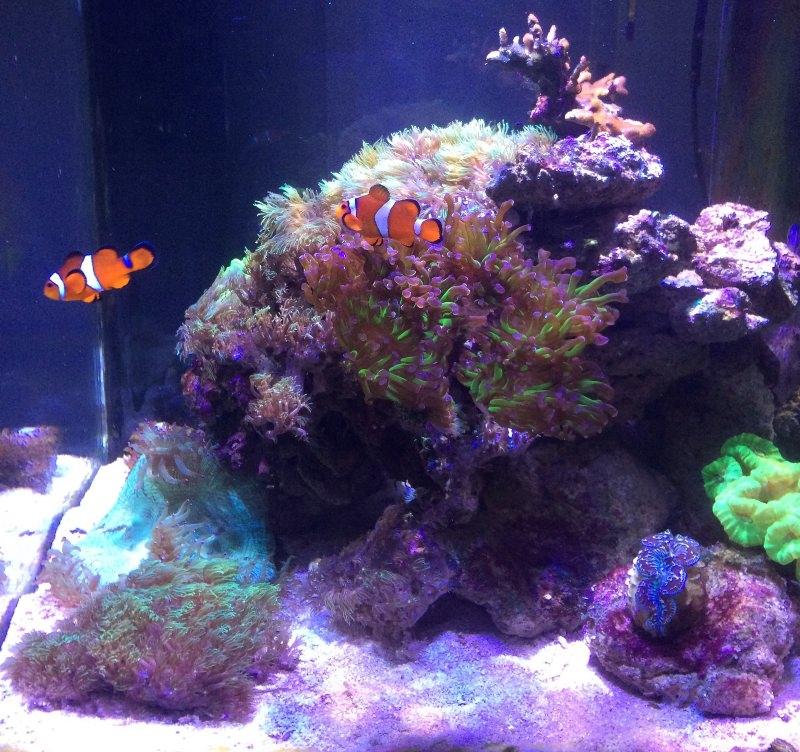 Aquarium récifal de Thesaur