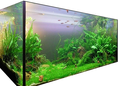 Nettoyer Decor Aquarium Algue