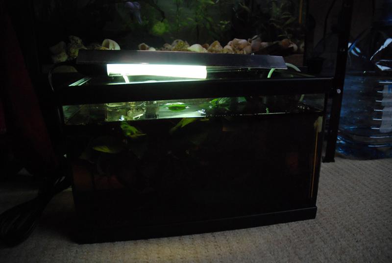 photo https://www.aquariophilie.org/images/article/ECLAIRAGE_AUX_LEDs_SIMPLE_ET_PAS_CHER_PARTIE_1_Preambule_equiper_un_petit_bac_de_10_litres_sans_eclairage_a11141652_2.jpeg