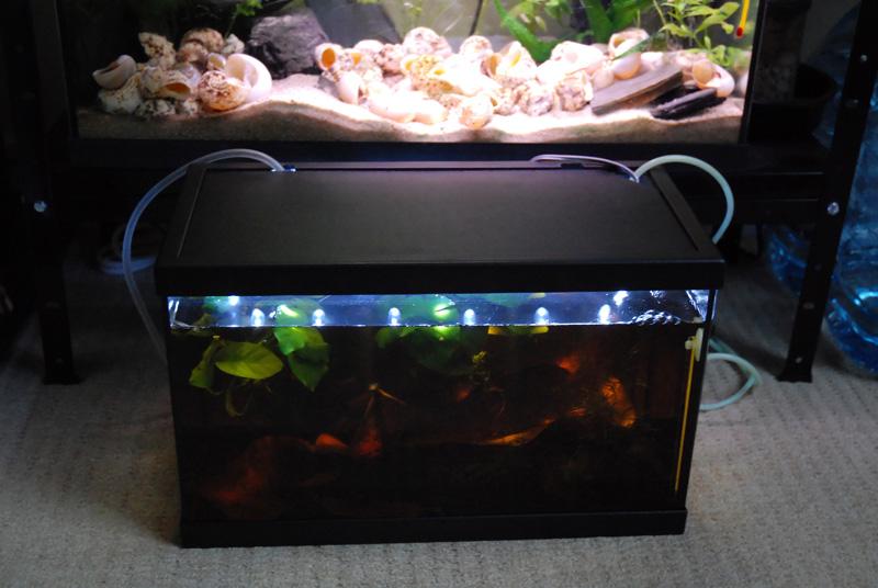 photo https://www.aquariophilie.org/images/article/ECLAIRAGE_AUX_LEDs_SIMPLE_ET_PAS_CHER_PARTIE_1_Preambule_equiper_un_petit_bac_de_10_litres_sans_eclairage_a11141652_4.jpeg