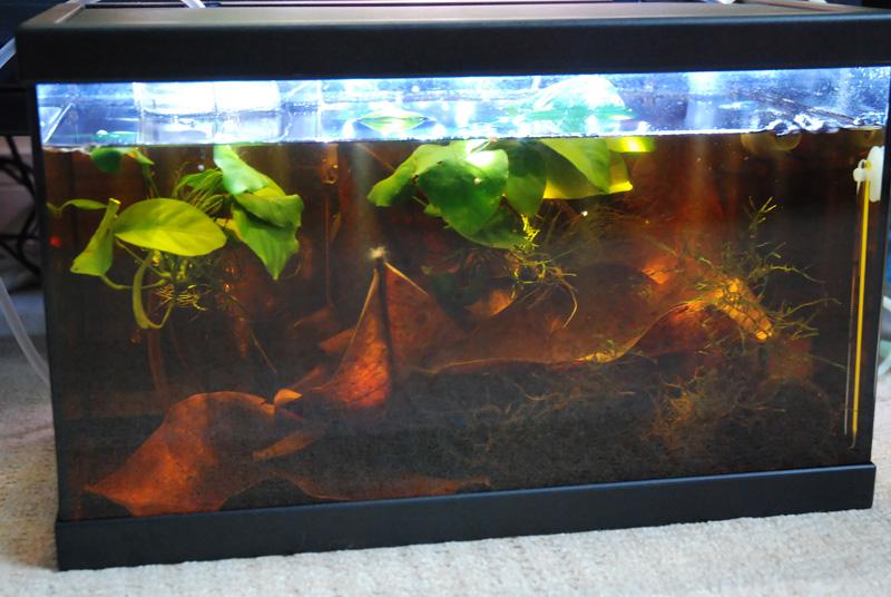 photo https://www.aquariophilie.org/images/article/ECLAIRAGE_AUX_LEDs_SIMPLE_ET_PAS_CHER_PARTIE_1_Preambule_equiper_un_petit_bac_de_10_litres_sans_eclairage_a11141652_5.jpeg