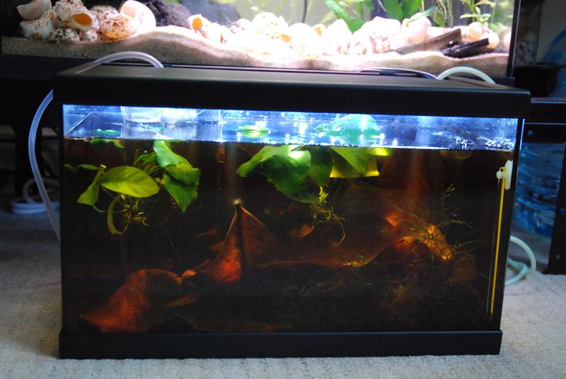 photo https://www.aquariophilie.org/images/article/ECLAIRAGE_AUX_LEDs_SIMPLE_ET_PAS_CHER_PARTIE_1_Preambule_equiper_un_petit_bac_de_10_litres_sans_eclairage_a11141652_6.jpeg