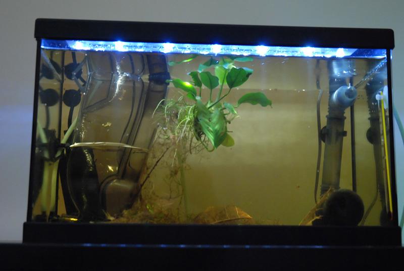 photo https://www.aquariophilie.org/images/article/ECLAIRAGE_AUX_LEDs_SIMPLE_ET_PAS_CHER_PARTIE_1_Preambule_equiper_un_petit_bac_de_10_litres_sans_eclairage_a11141652_7.jpeg