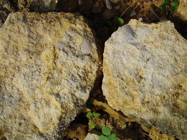 photo https://www.aquariophilie.org/images/article/L_usage_des_pierres_en_aquariophilie_a01282210_1.jpeg