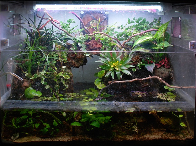 photo https://www.aquariophilie.org/images/article/Le-biotope-Paludarium_a09131903_0.jpg