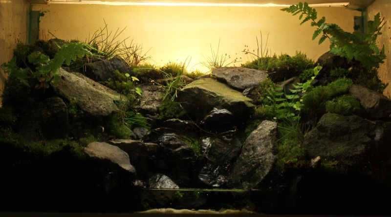 photo https://www.aquariophilie.org/images/article/Le-biotope-Paludarium_a09131903_1.jpeg