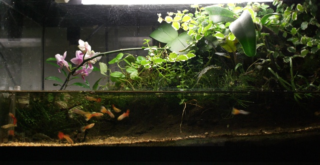photo https://www.aquariophilie.org/images/article/Le-biotope-Paludarium_a09131917_2.jpeg
