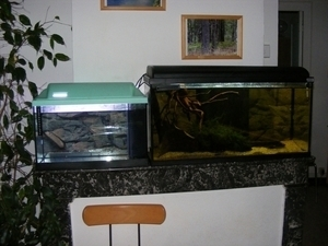 photo http://www.aquariophilie.org/images/article/Maintenance_et_reproduction_d_Apistogramma_baenschi_a04120825_9.jpeg