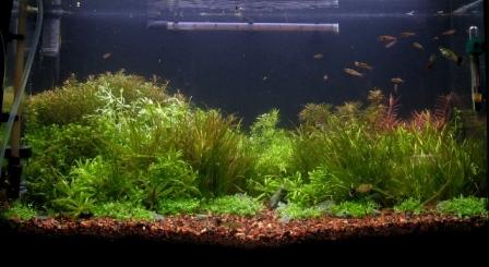 photo https://www.aquariophilie.org/images/article/Mise_en_route_et_evolution_d_un_bac_plante_a04272104_9.jpeg