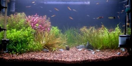 photo https://www.aquariophilie.org/images/article/Mise_en_route_et_evolution_d_un_bac_plante_a04272111_8.jpeg