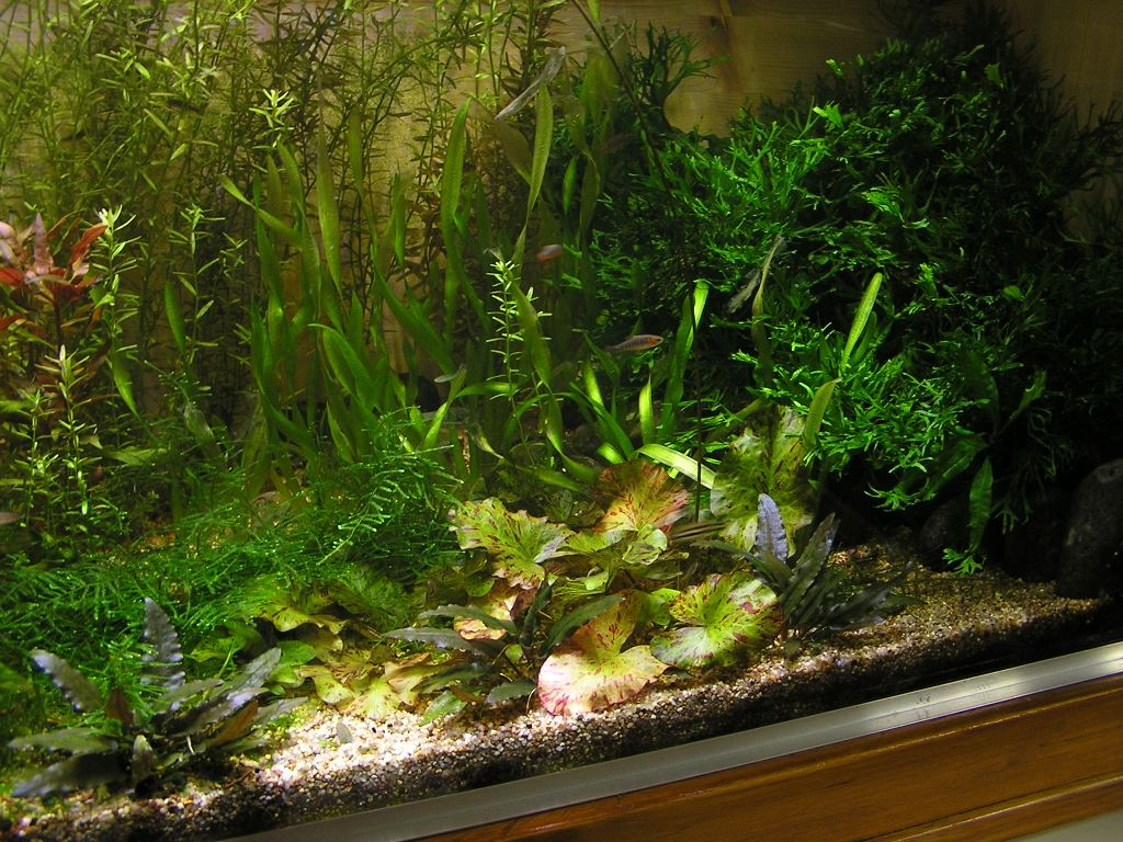 photo https://www.aquariophilie.org/images/article/Mon-aquarium-et-ses-secrets_a05312305_0.jpeg