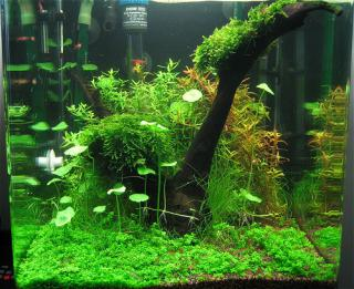 photo https://www.aquariophilie.org/images/article/Nano_aquariums_a04190921_0.jpeg