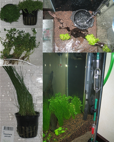 photo https://www.aquariophilie.org/images/article/Nano_aquariums_a04190921_3.jpeg