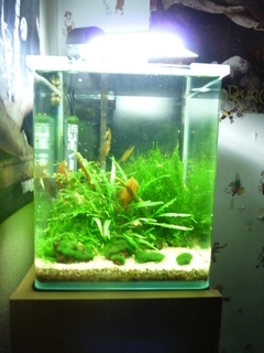 photo https://www.aquariophilie.org/images/article/Nano_aquariums_a04190937_6.jpeg