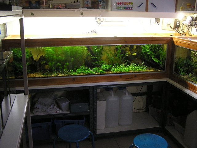 photo https://www.aquariophilie.org/images/article/Un-aquarium-en-bois_a12231436_1.jpeg