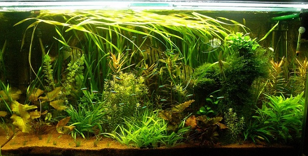 photo https://www.aquariophilie.org/images/article/l-aquascaping_a09032158_0.jpeg