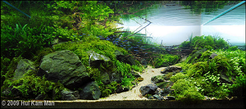 photo https://www.aquariophilie.org/images/article/l-aquascaping_a09061809_0.png