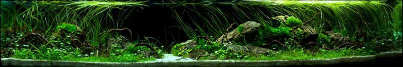 photo https://www.aquariophilie.org/images/article/l-aquascaping_a09062137_3.png