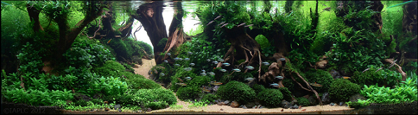 photo https://www.aquariophilie.org/images/article/l-aquascaping_a09062137_8.png