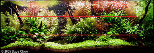 photo https://www.aquariophilie.org/images/article/l-aquascaping_a09062246_15.png