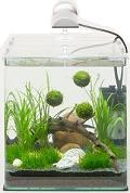 Article Nano aquariums