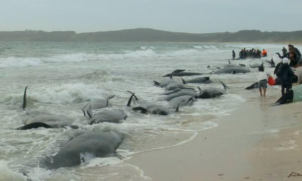 https://www.aquariophilie.org/images/baleines-nouvelle-zelande.jpg
