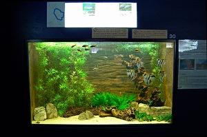 aquarium 5