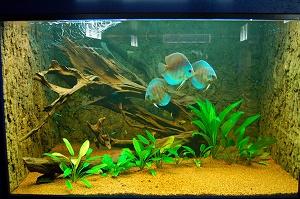 aquarium 6