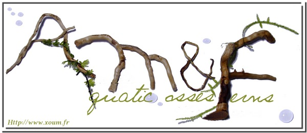 logo de Aquatic Mosses & Ferns