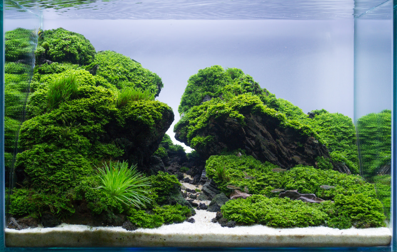 photo ../images/nano-aquascape-simons-blog-aquascaping-aquarium-aquascapingnano-with-dragonnano.jpg