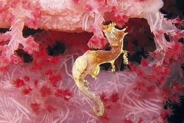 Mâle Hippocampus debelius par Kai Walz