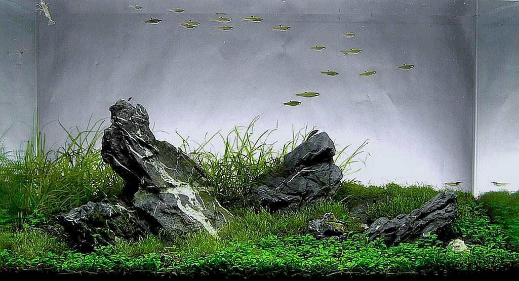 grand aquarium pas cher