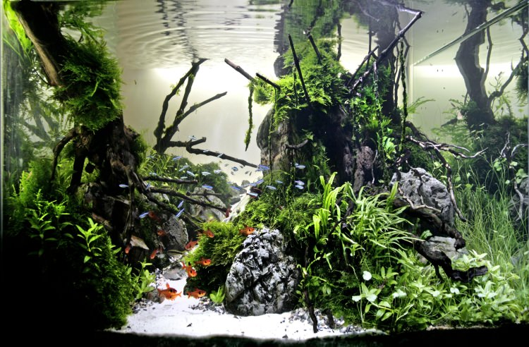 Photo Aquascaping - Photo Hxhkirua666