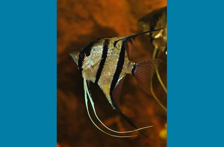 Photo Aquarium Aurélie & Sébastien