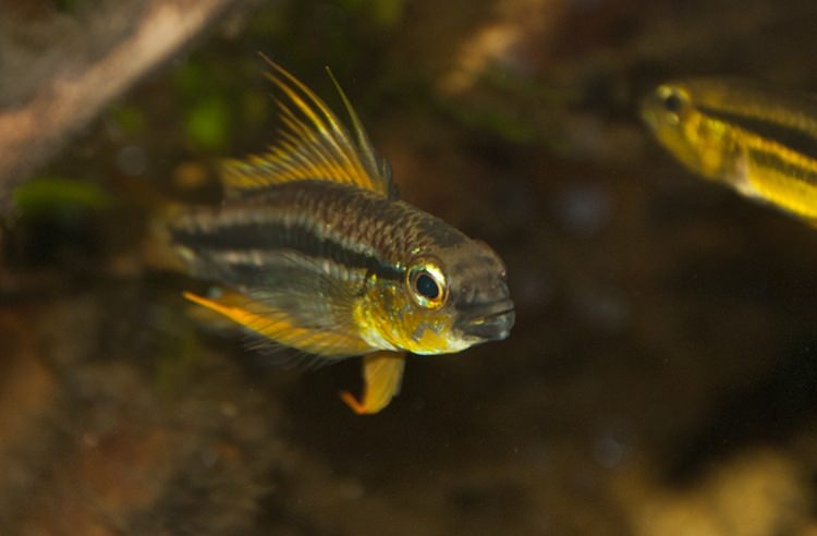 Photo Les aquariums d'Anomalie