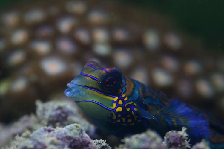 Photo Poissons récifaux et coraux