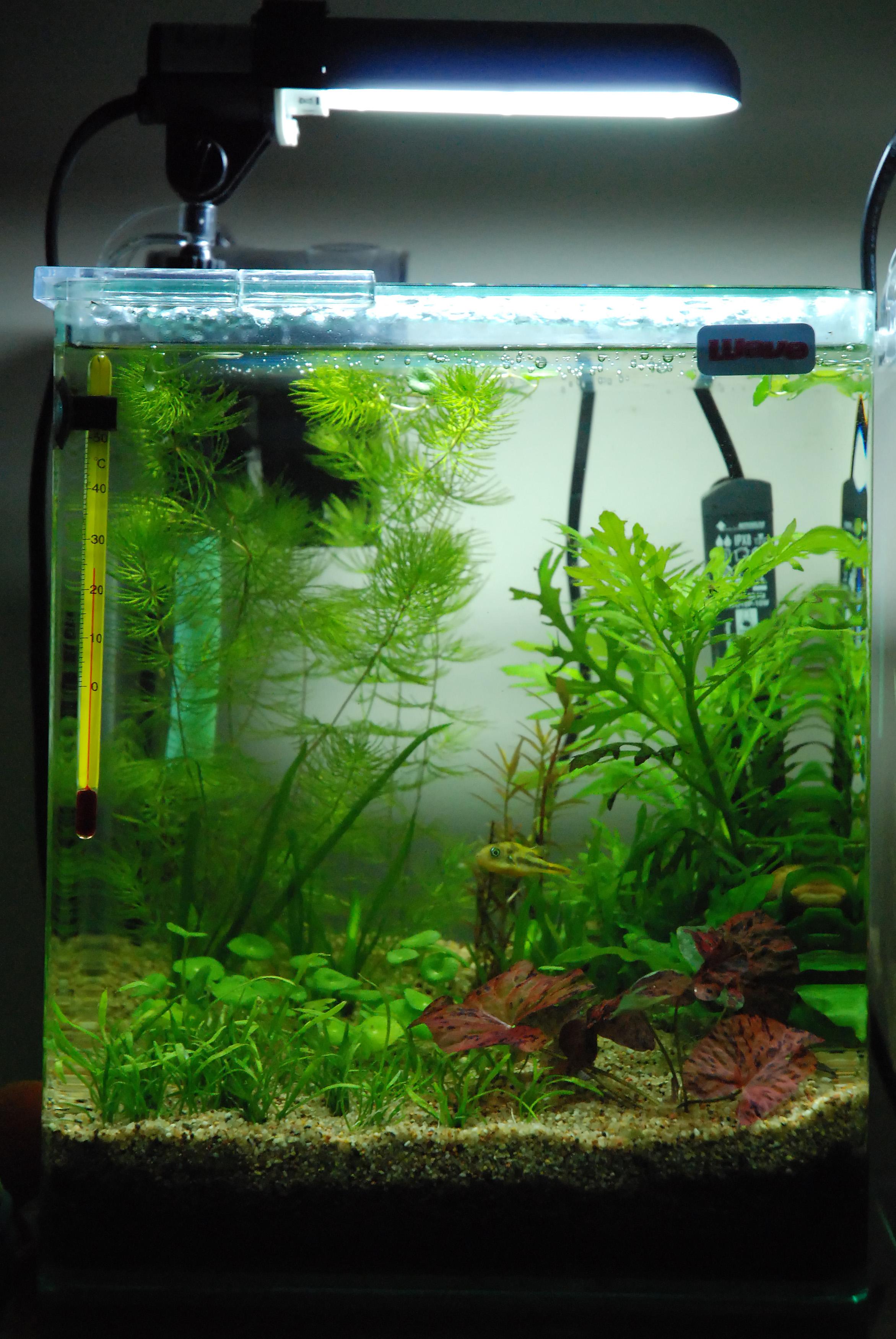 15 litres t traodon travancoricus l for Filtre aquarium 20l