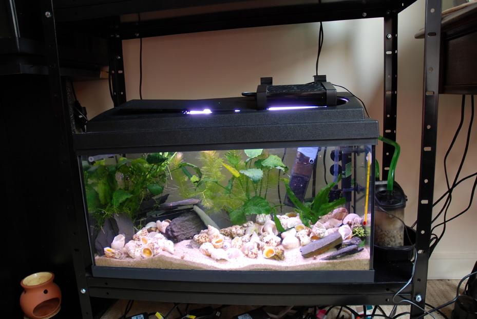 Solde aquarium for Aquarium en solde